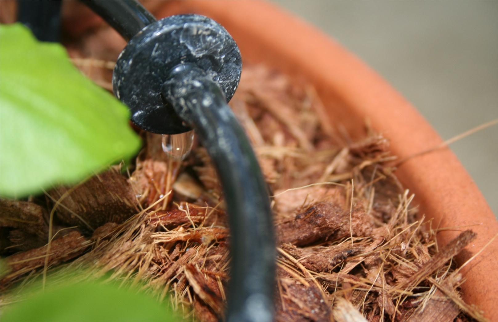 Guide Self Watering Outdoor Container Garden